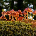 ciri-ciri jamur dan cara hidupnya
