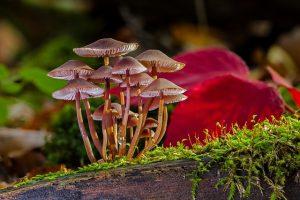jamur yang menguntungkan dan merugikan