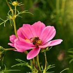 perkembangbiakan generatif dan vegetatif pada hewan
