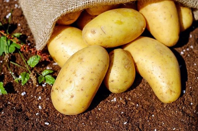 jenis perkembangbiakan vegetatif alami tumbuhan