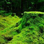penjelasan tumbuhan lumut